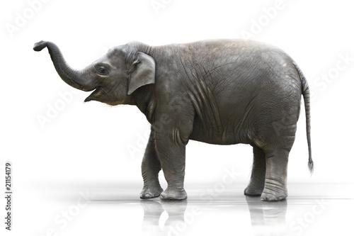Foto op Aluminium Olifant Junger Elefant macht den Rüssel hoch wd605