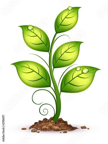 Obraz na plátně Growing plant