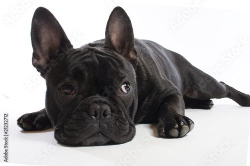 Stickers pour porte Bouledogue français bulldogge