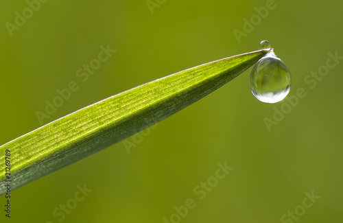 Dewdrop on tip of a blade of grass