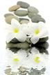 décoration zen, fleurs blanches, galets, relaxation, fond blanc
