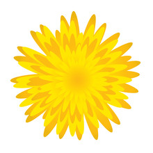 Dandelion.Spring Flower