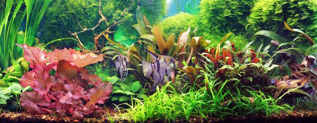 Dekoracyjne akwarium