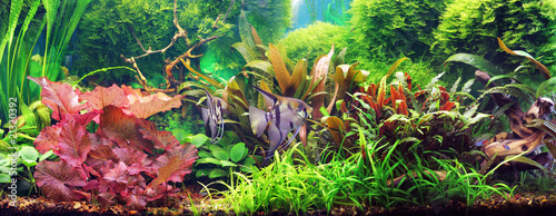 Decorative aquarium Fotobehang