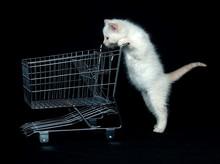 Kitten Pushing Shopping Cart