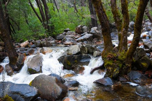 Garden Poster Forest river Down stream Yosemite Falls