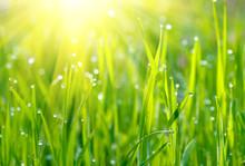 Green Grass Sunrise.