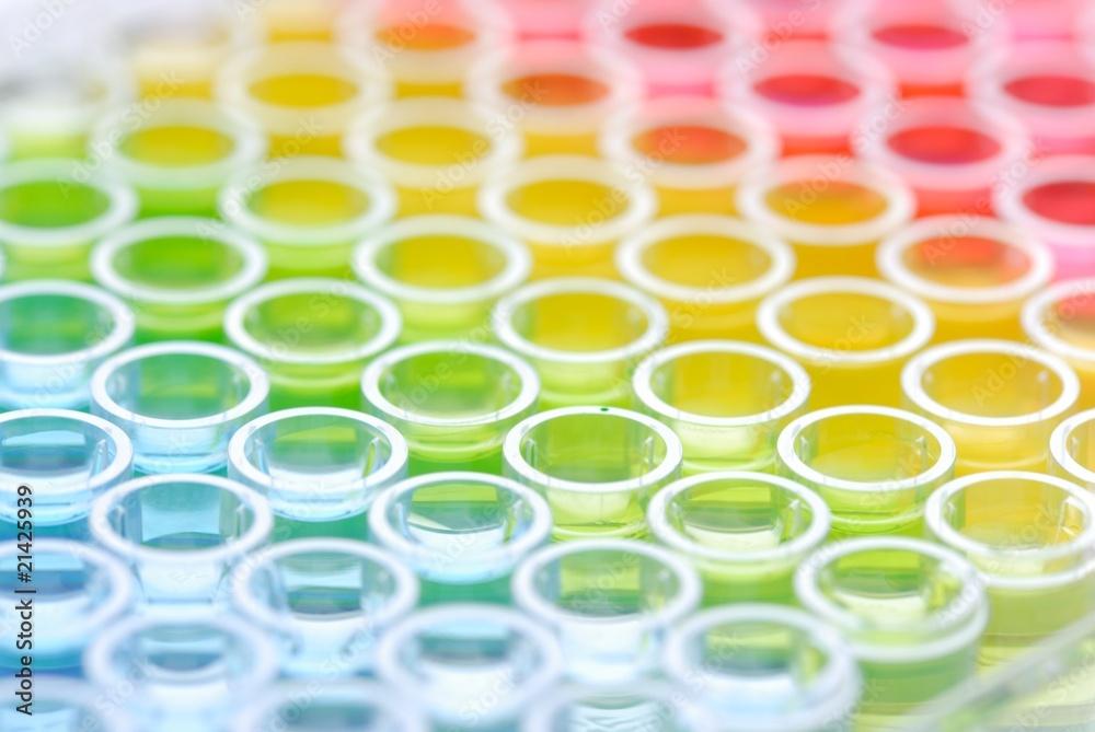 Fototapeta close up of Enzyme-linked Immunospot Assay plate
