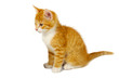 Leinwandbild Motiv Red cat
