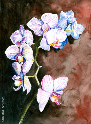 Orchid watercolor painted.