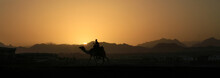 Camel At Sunset In Sinai Mountains