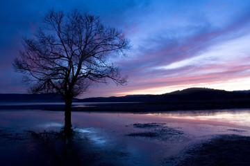 Fototapeta na wymiar tree silhouette
