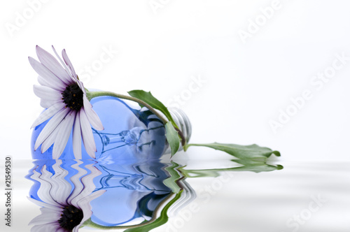 Fototapeta lampadina azzurra riflessa obraz na płótnie