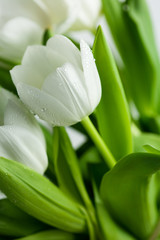 Obraz White Tulips