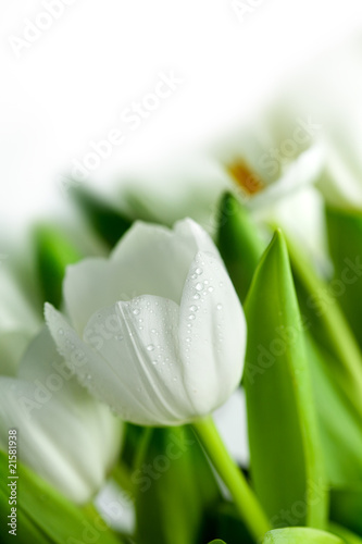 Photo White Tulips