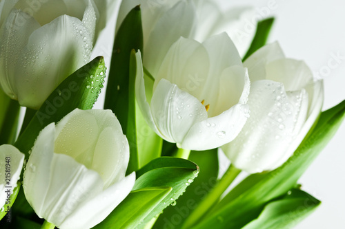 Papiers peints Tulip White Tulips