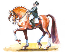 Dressage Rider Cartoon.