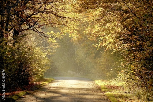 Papiers peints Foret brouillard Country road through the autumn forest at sunset