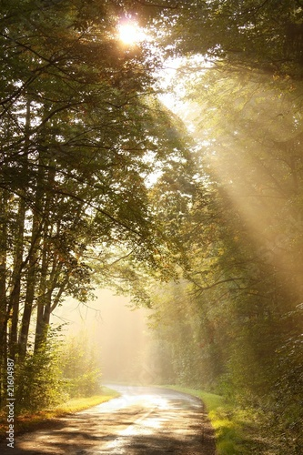 Papiers peints Foret brouillard Country road through autumn forest at sunrise