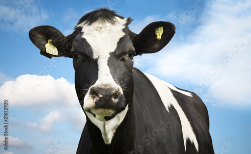 Photo Stands Cow Cow against blue sky