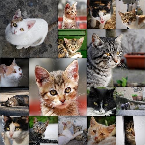 Naklejki koty   koty