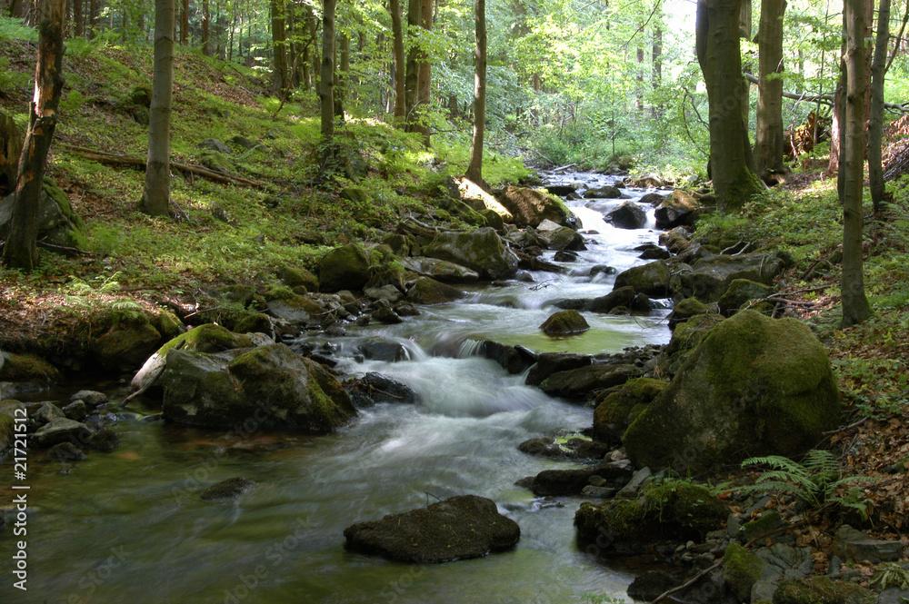 Fototapeta Waldimpression im Vessertal, Thüringen
