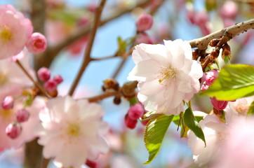 fototapeta wiosna