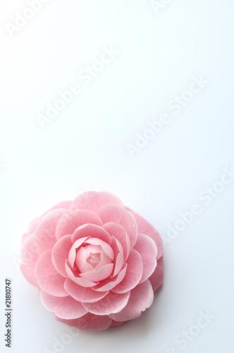 camellia Fototapete
