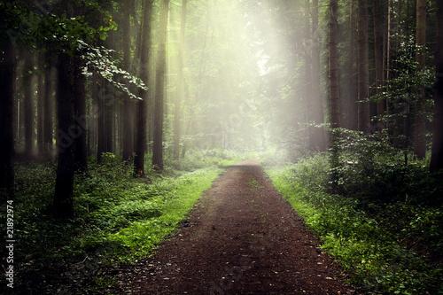 Foto op Canvas Weg in bos Nebel im Wald