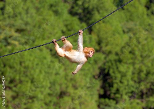 Tuinposter Eekhoorn hanging monkey