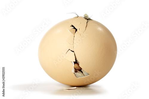 Fotografia  egg cracked from the inside