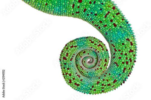 Foto op Plexiglas Kameleon Queue du caméléon de La réunion sur fond blanc