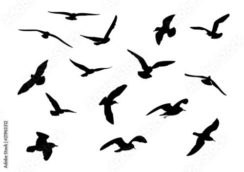 Fotomural 14 seagull silhouette