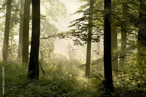 Papiers peints Foret brouillard Sunbeams falls into spring forest