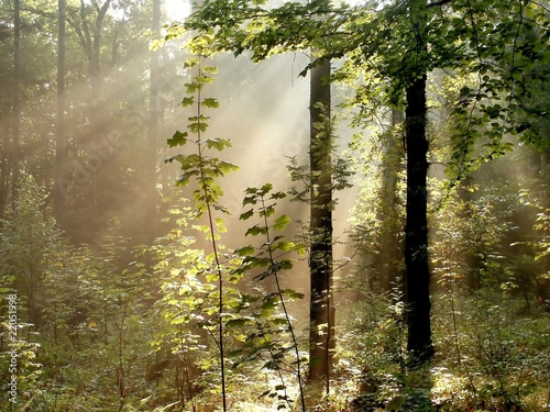Papiers peints Foret brouillard Sunlight falls into the misty woods