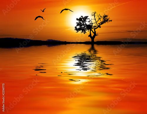 Poster de jardin Rouge el arbol y el sol