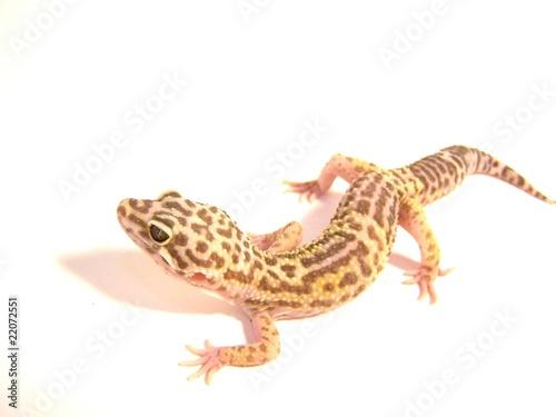 Deurstickers Luipaard Albino Leopard Gecko Side view