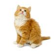 Leinwandbild Motiv Kitten