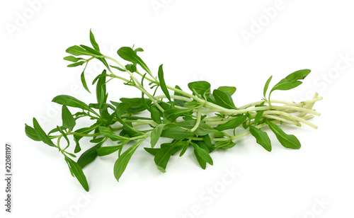 Fotografía  Summer savory isolated on white background