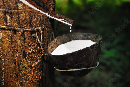 Fotografía  Natural Rubber