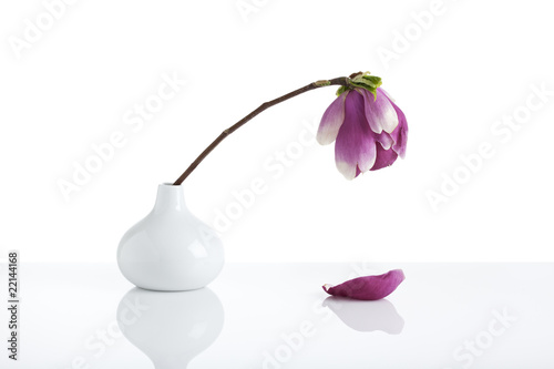 wilting magnolia blossom in white vase Canvas-taulu