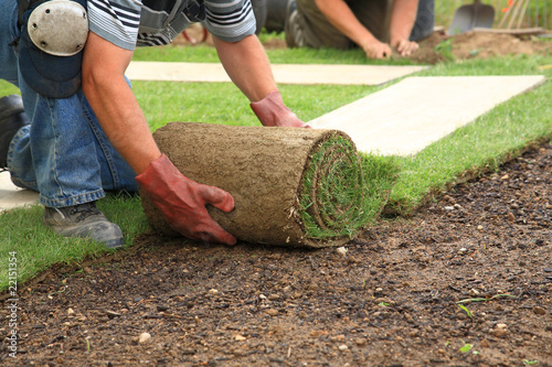 Poster Jardin Laying sod for new lawn