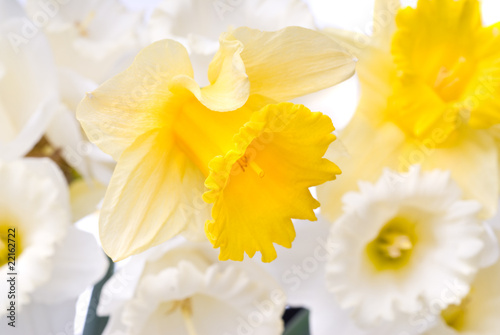 Fototapeta bouquet from white and yellow narcissus