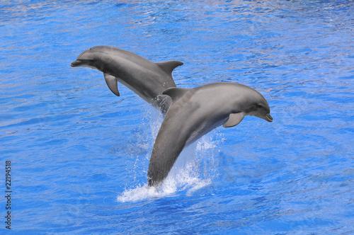 Foto op Plexiglas Dolfijnen Deux dauphins sautant au dessus de l'eau