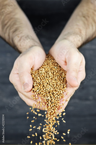 Hands pouring grain