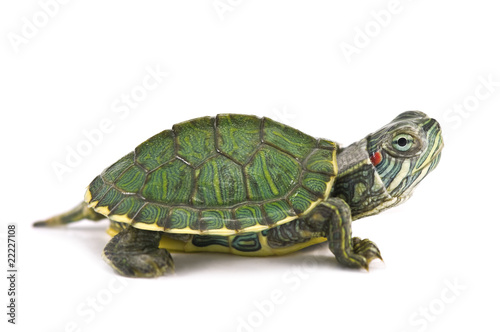 Photo sur Toile Tortue tortoice
