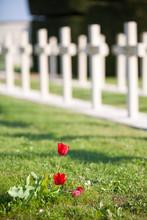2 Tulipes Devant Un Cimetiere Militaire