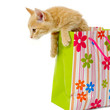 canvas print picture Kitten and shopping bag