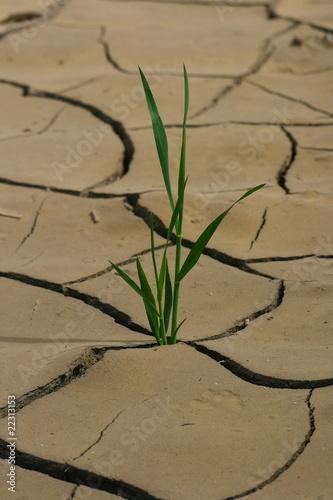 herbe qui pousse dans le désert #22313153
