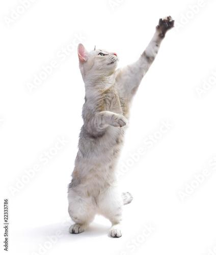 Fotografia, Obraz  Cat